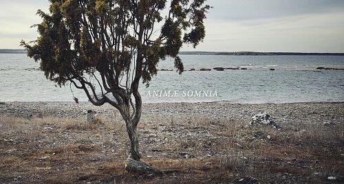 Animæ Somnia